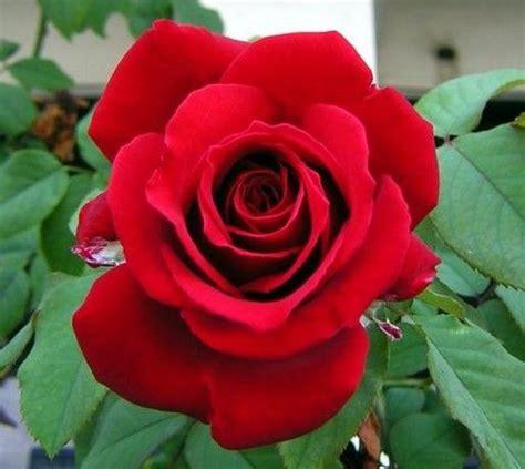 gambar bunga tercantik dunia republika rss