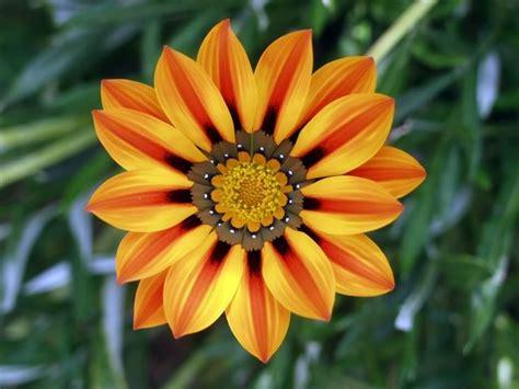 piante particolari da giardino fiori particolari immagini fy36 187 regardsdefemmes