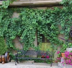Blühende Kletterpflanzen Winterhart Mehrjährig : kletterpflanzen schnellwachsende und bl hende reben f r ~ Michelbontemps.com Haus und Dekorationen