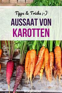 The Complete Carrot Guide  Planting  Growing And