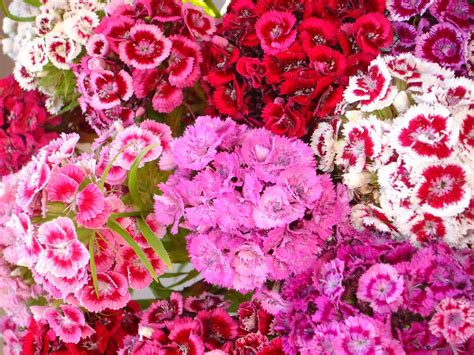 flowers for and summer summer flowers wallpapers beautiful flowers wallpapers