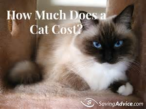 how much does a cat cost savingadvice saving