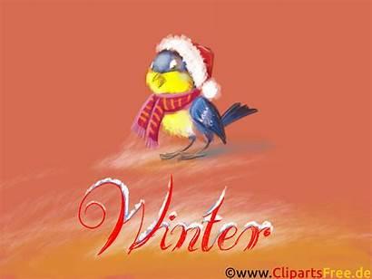 Hintergrundbilder Desktop Winter Frost Schnee Gimpel Thema