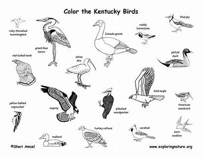 Birds State Coloring Mammals Kentucky Pages Reptiles