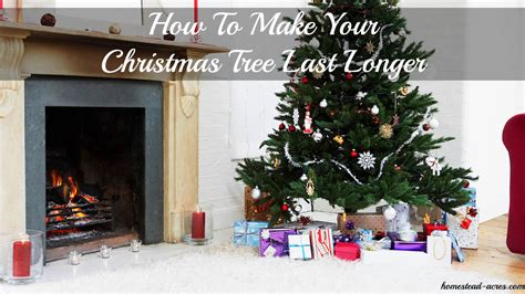 how to make your christmas tree last longer homestead acres