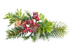 christmas tree branch with holly decor stock photo colourbox