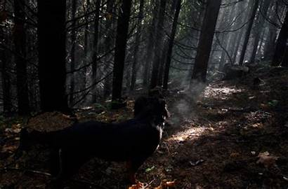 Forest Hipster Gifs Mystic Fumaca Dog Smoke