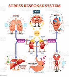 Stress Response System Vector Illustration Diagram Nerve