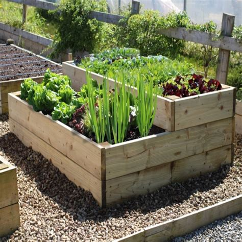vegetable garden plans  beginners  healthy crops