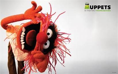 Muppets Wallpapers Filmofilia