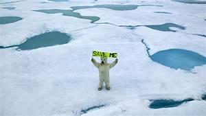 1920x1080 Greenpeace, Global Warming, Arctic Bear, Ice ...