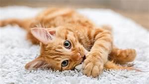 Kletterbaum Für Katzen : globuli f r katzen tipps und infos ~ Lizthompson.info Haus und Dekorationen