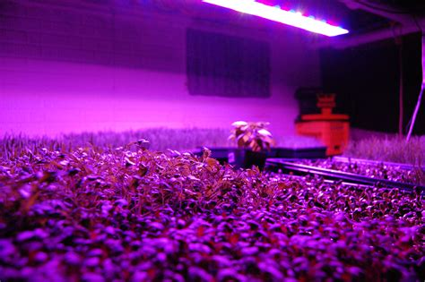 Plant Lighting Hydroponics by Indoor Greenhouse Products Radio