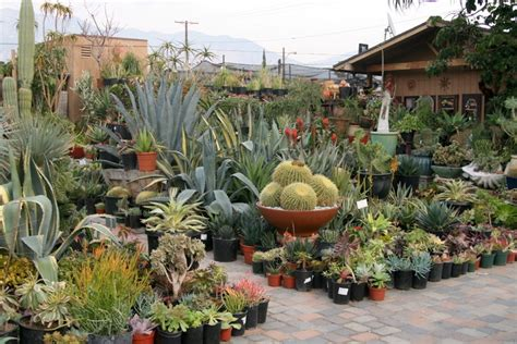 cactus and succulent container gardens succulent garden ideas