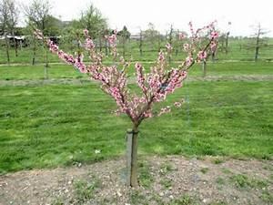 Comment Tailler Un Abricotier : les 67 meilleures images du tableau former un arbre ~ Melissatoandfro.com Idées de Décoration