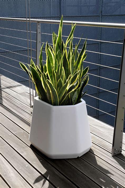 piante ricanti per terrazzo vaso per piante da esterno e interno ops m nicoli