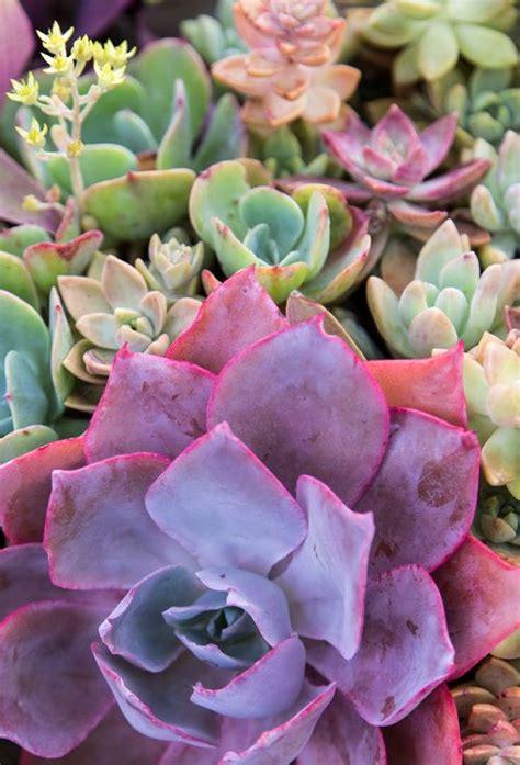 1230 Best Cactus & Succulents Images On Pinterest