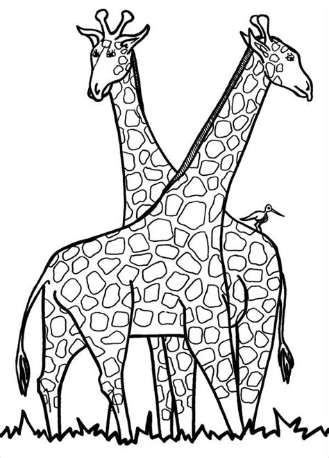 giraffe coloring pages  psd  jpg format