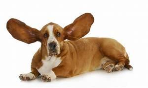 Dog Listening Royalty Free Stock Photography - Image: 29305147
