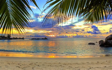 Desktop Backgrounds by Palm Tree Desktop Wallpapers 73 Background Pictures