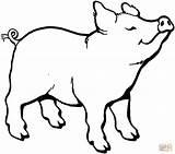 Pigs Porco Huele Cerdito sketch template