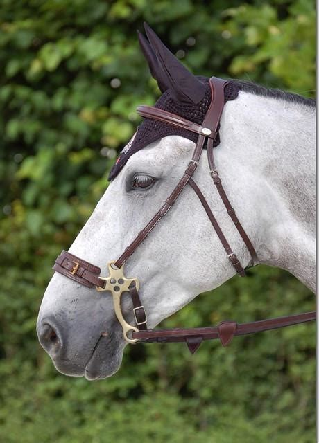 bridle hackamore english horse bitless dy bit tack horses mechanical pony riding leather equestrian dyon less saddle