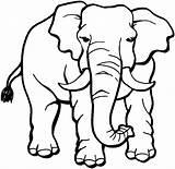 Elephant Coloring Printable Elephants Choretell sketch template