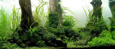 Aquascape Forest - these custom aquariums with underwater trees will