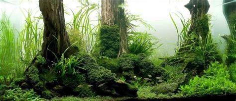 Best Aquarium Driftwood For Serious Aquascaping Aquarium