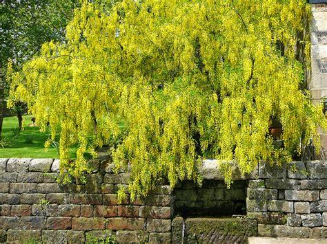plantes exterieur toutes saisons plante tombante liste ooreka