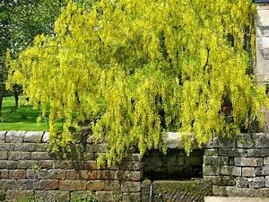 Plantes D Ombre Extérieur : plante retombante exterieur ombre you project info ~ Melissatoandfro.com Idées de Décoration