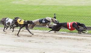 The Negative Effects of Greyhound Racing