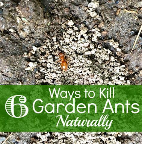 rid  ants   garden