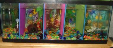 fish tank divider 55 gallon