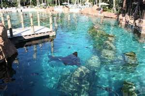 Busch Gardens Orlando Florida by In The Ray Pool Picture Of Discovery Cove Orlando