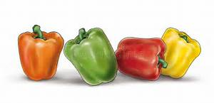 Colorful Peppers On White Illustration Stock Illustration