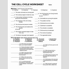 Cell Cycle Review  Biology Chapter 10  Pinterest Cycling