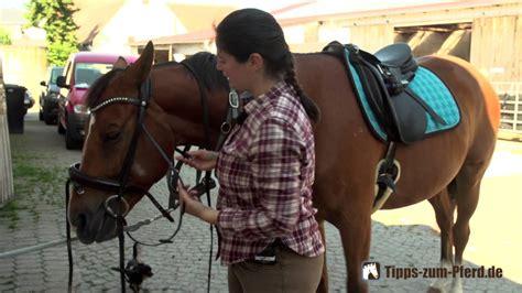 pferd auftrensen trense richtig aufzaeumen youtube