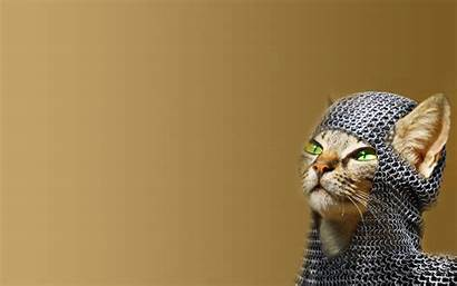 Cat Funny Cats Desktop Wallpapers Creative Chainmail