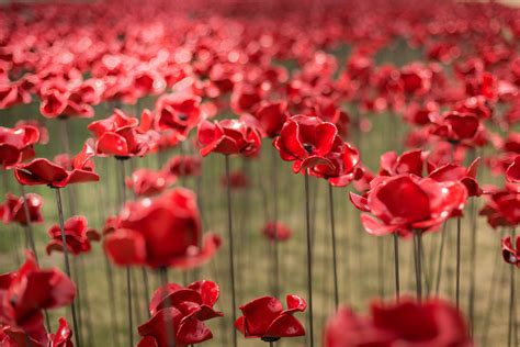 Poppies Wave And Weeping Window  1418 Now