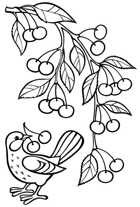 disegni da colorare  ramo  ciliegie