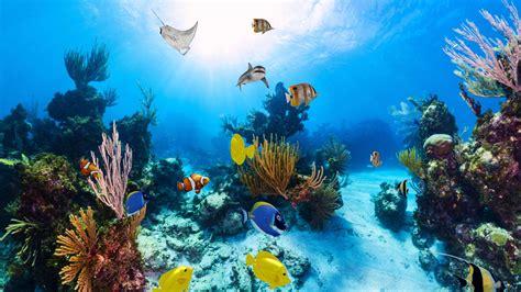 Animated Aquarium Wallpaper For Windows 8 - 3d aquarium wallpaper for windows 8 enagis