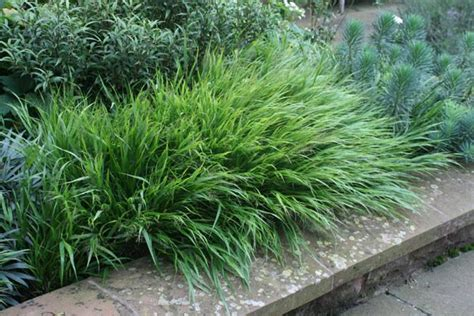 small ornamental grasses pinterest discover and save creative ideas