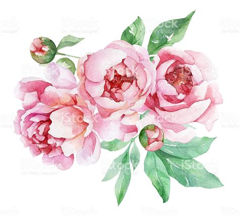 peony clipart peonies clipart clipground