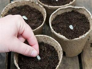 Planting In Pre School