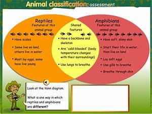 Animal Classification  Assessment  Teacher Guide