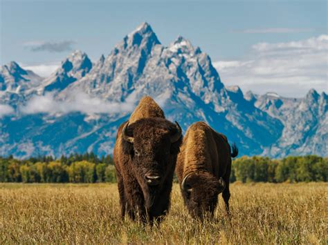guide  grand teton national park