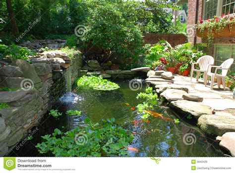 fish pond royalty  stock images image