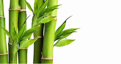 Bamboo Plants Socks Blend Aspca Care Indian
