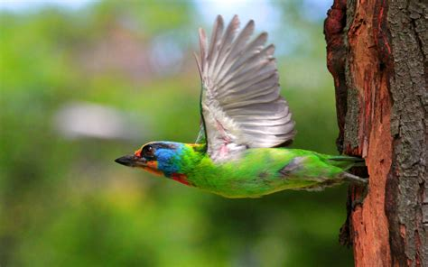 colorful birds flying hd wallpaper background images